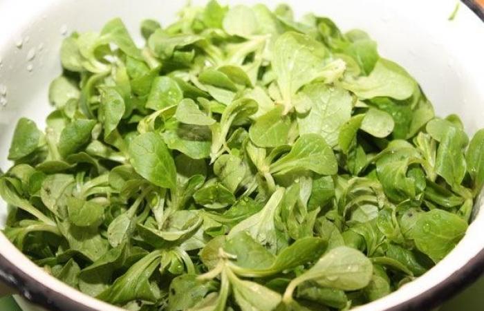 Фото салат корн